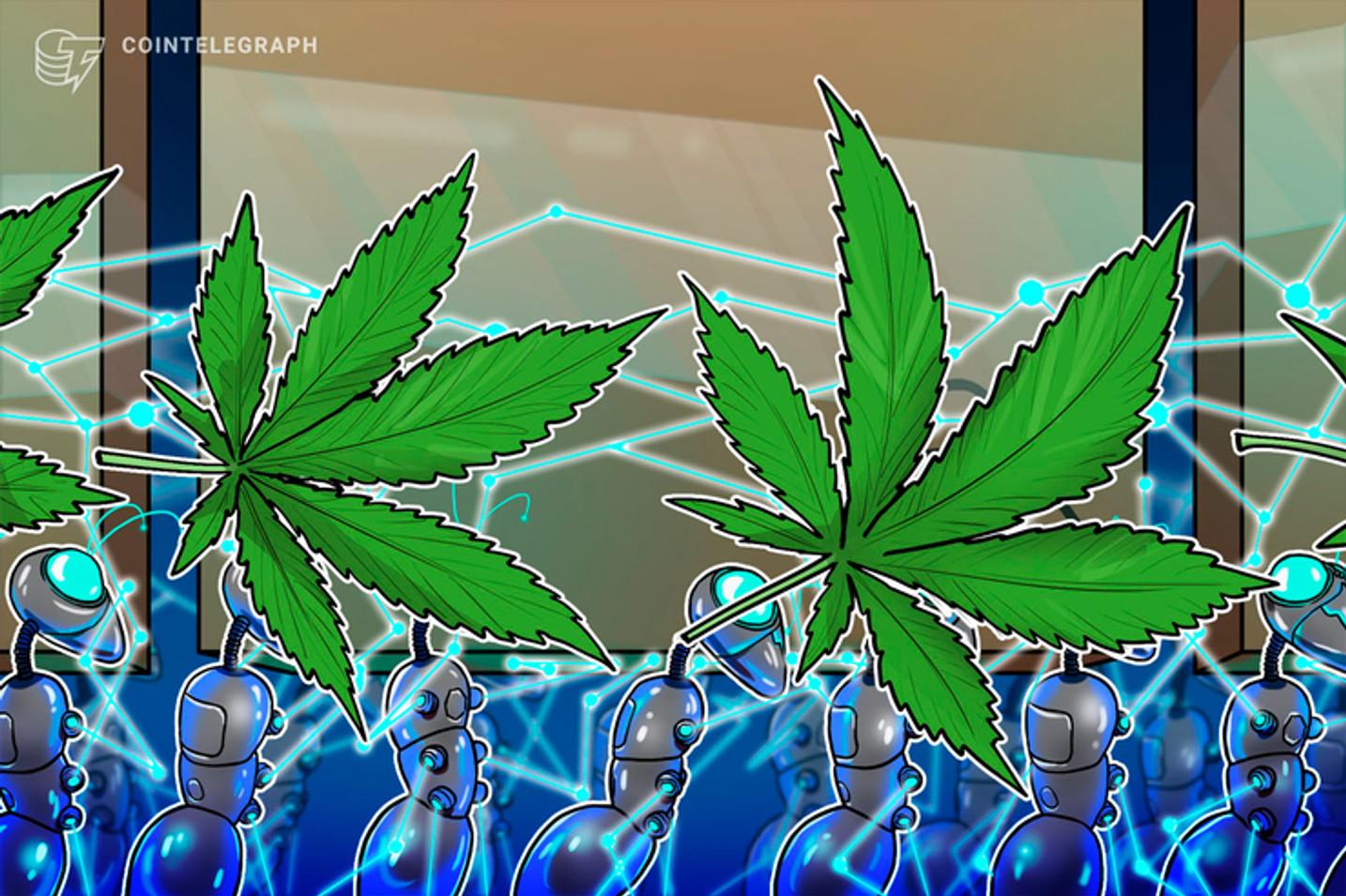 Brasil aprova maconha medicinal e abre caminho para blockchain