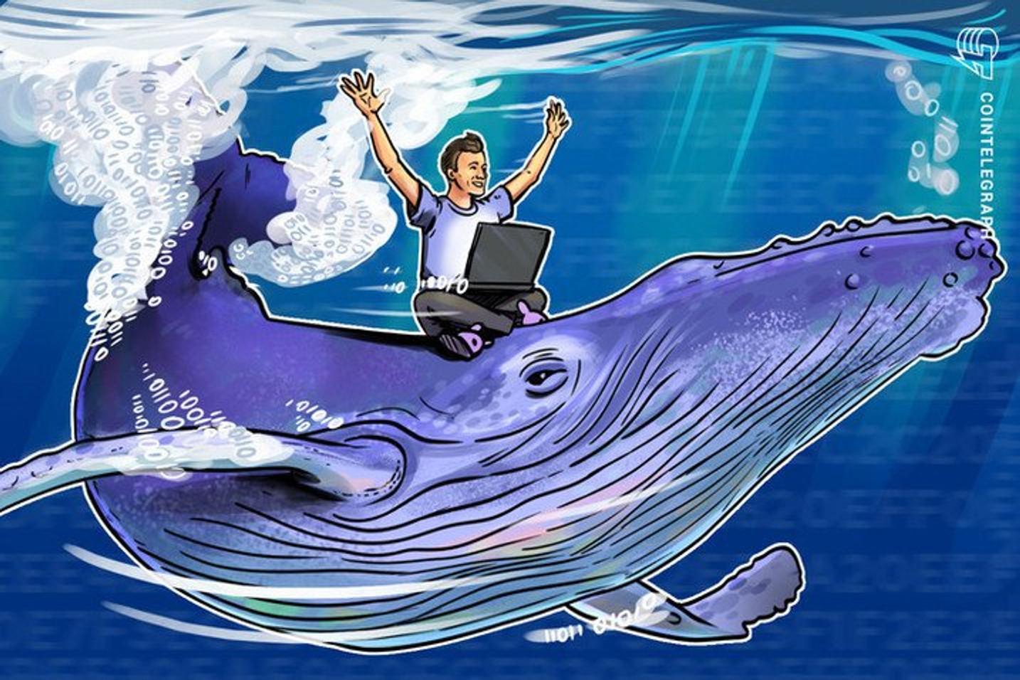 Baleias retiram 15.855 Bitcoins das exchanges em diversas transações
