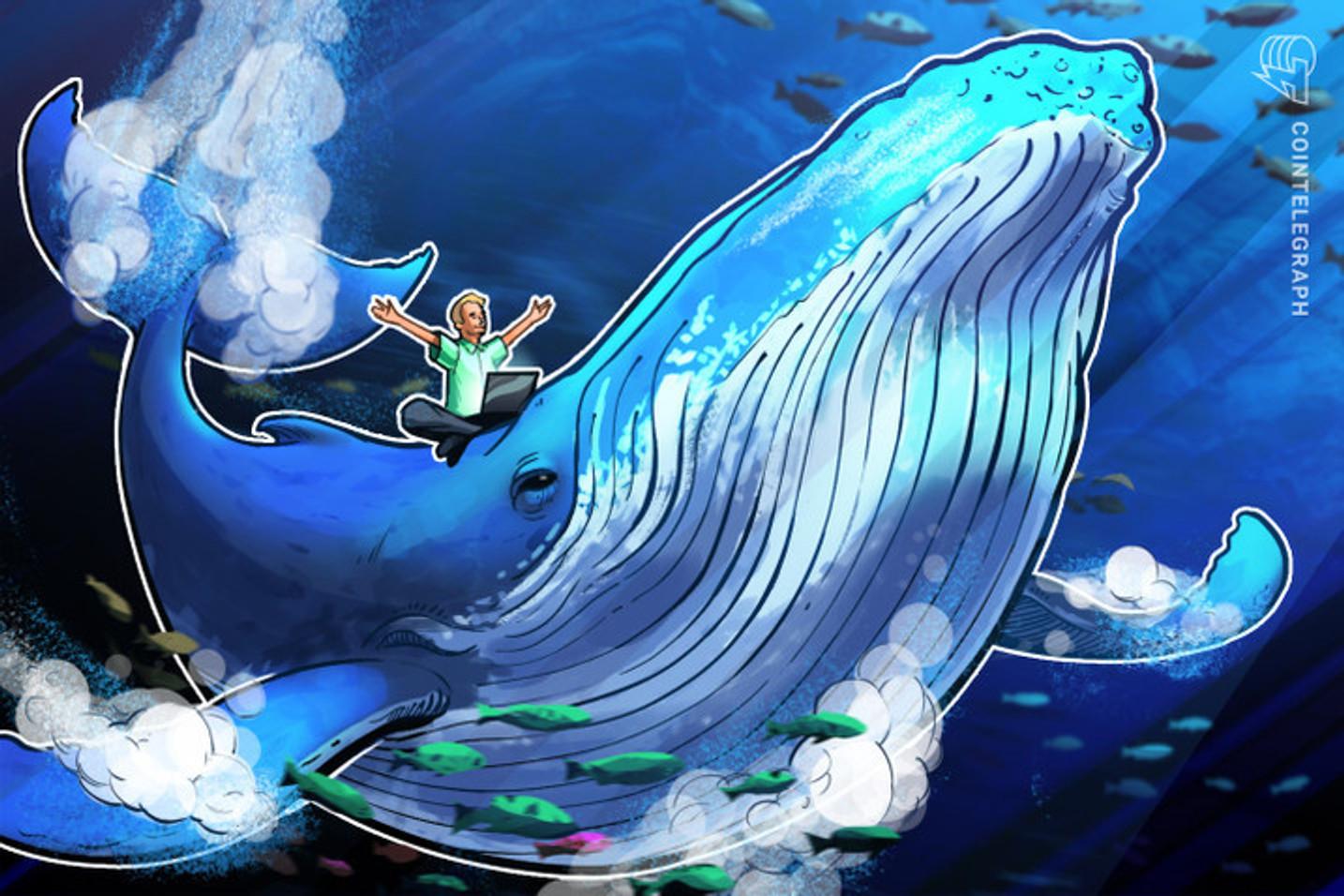 Un niño de 12 años se hace millonario vendiendo NFT con diseños de ballenas y una roca invisible que se vende por 66 Ethereum