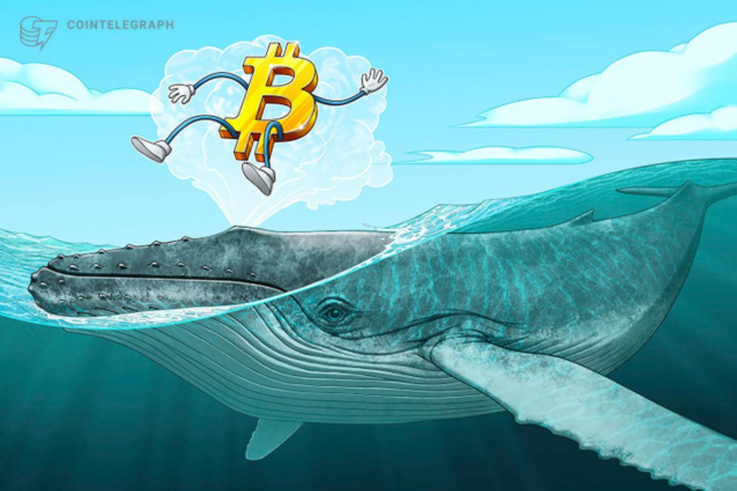 ¿La caída en los precios de Bitcoin, Ethereum y Bitcoin Cash son responsabilidad de las ballenas?