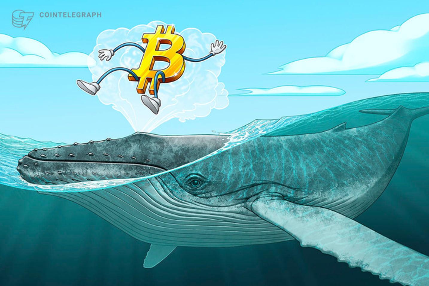 仮想通貨ビットコインのクジラ、3月暴落後も急増 半減期意識か?