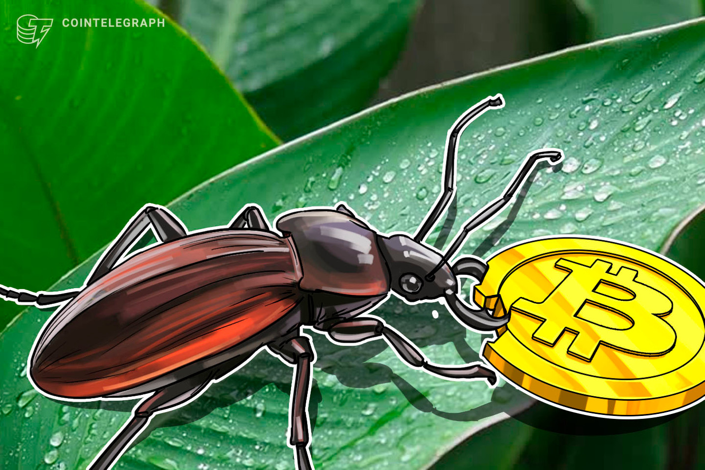 Bug on Kraken Let Users Buy Bitcoin at Levels Below Market Price