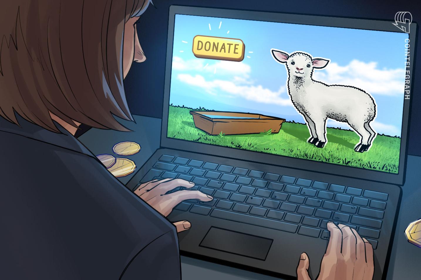 암호화폐 기부해 양 먹이 주는 온라인 중계 프로그램 시작
