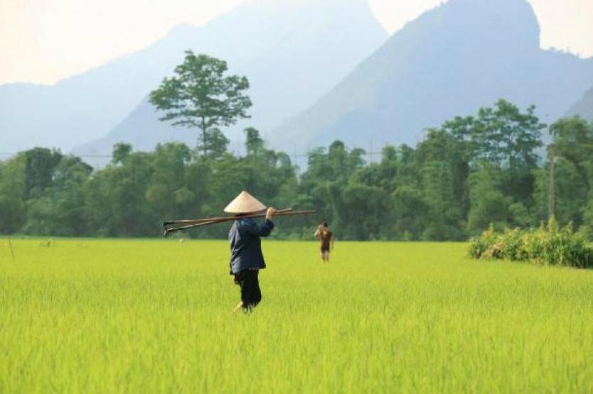 Vietnam forbids Bitcoin transactions