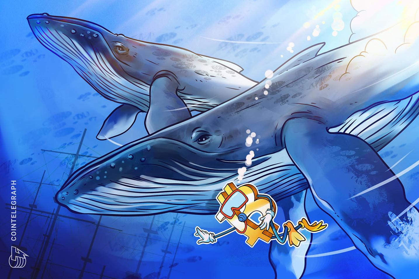 Segundo novo estudo, concentração de Bitcoins nas mãos de baleias é muito menor do que dados anteriores mostravam