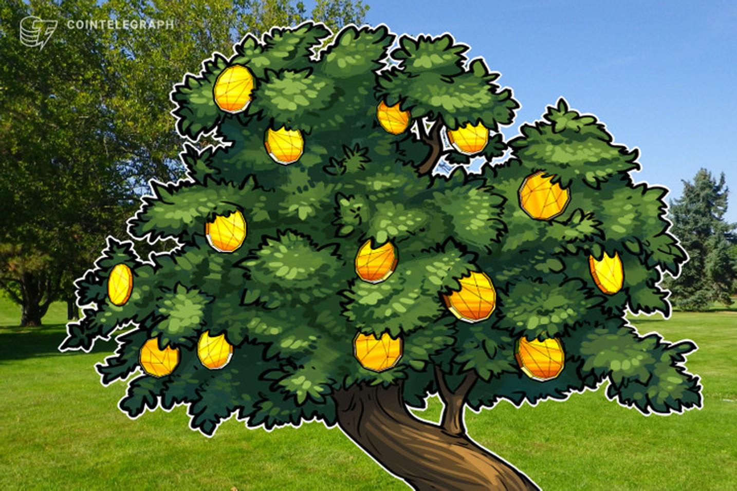 Lanzan un token asociado a la Selva Misionera en Argentina