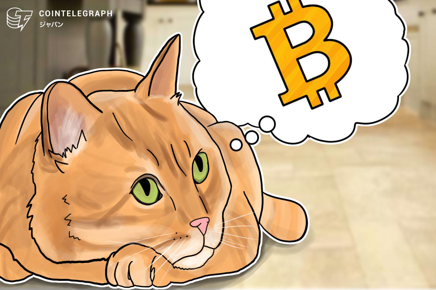 【12月4日 昼の仮想通貨ニュースまとめ】 ビットコインとリップルで明暗?