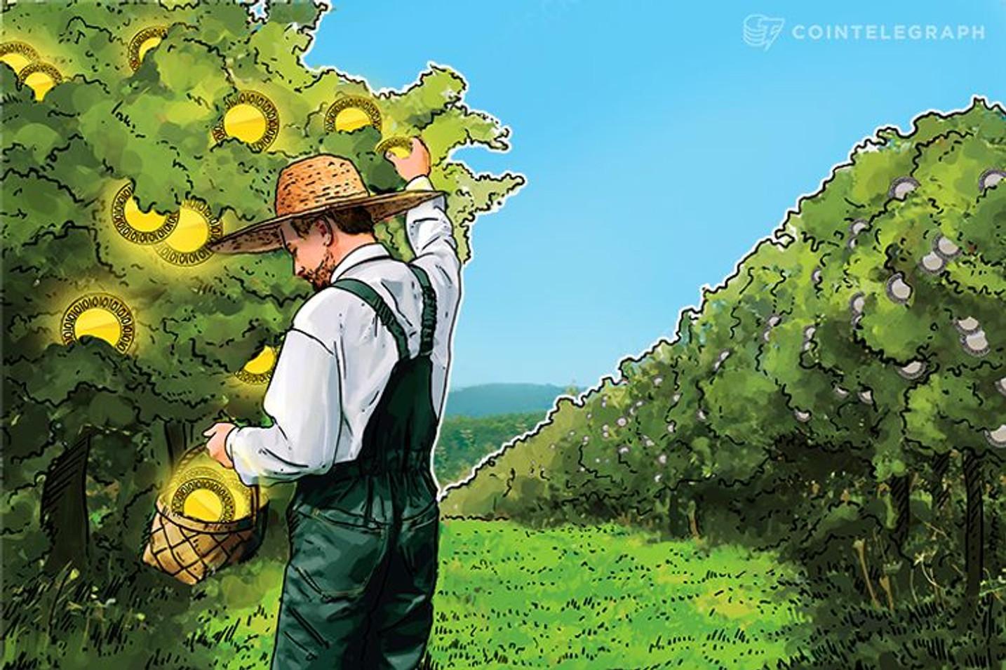 """Entrevista al CTO de Tree Farm Token: """"Usamos la red Ethereum para expandir una empresa agroforestal"""""""