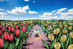 """L'Economista Capo del fondo d'investimento Vanguard compara il Bitcoin alla """"mania dei tulipani"""""""