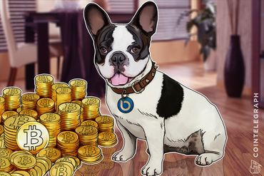 Apple Has Siri, Now Bitcoin Has Lola the French Bulldog