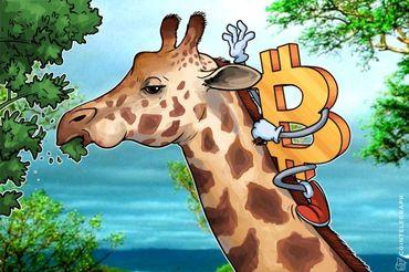 África do Sul no topo das pesquisas mundiais sobre Bitcoin em pico de adoção
