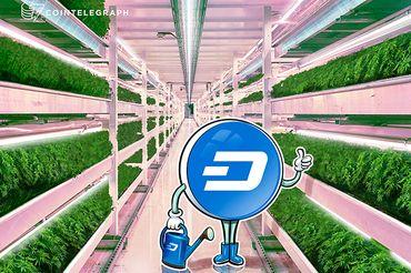 La moneda digital busca resolver el problema del efectivo de la industria del cannabis