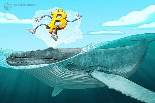 Millionär-Wale kaufen in den letzten 25 Tagen 90.000 Bitcoin auf