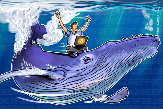 Bitcoin Hodlers Bought BTC 90% of 2020 as Halving Spawns New Whales