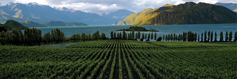 Winery to pay with Bitcoin, this time – New Zealand