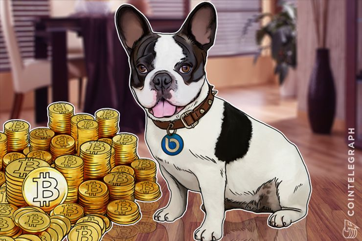 Apple Has Siri, Now Bitcoin Has Lola the French Bulldog