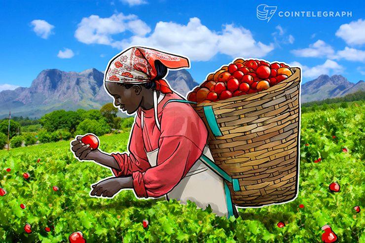 Fazendo crescer o jardim: Como usar o Blockchain na agricultura