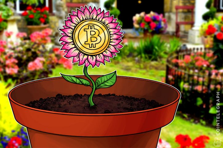 Bitcoin tulip mania continues as bbc journalist calls time on bubble ccuart Choice Image