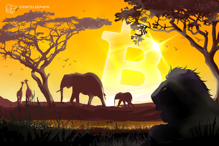 African Bitcoin Trading Volume Breaks 2017's Record Ahead of Halving