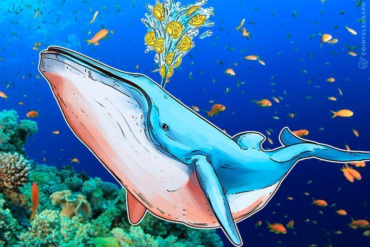 巨額ビットコインを持つ「クジラ」換金説の信ぴょう性は?仮想通貨専門家が解説