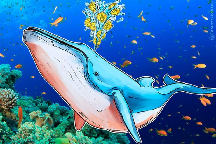 Una gran 'ballena' mueve 101.857 Bitcoins a direcciones desconocidas