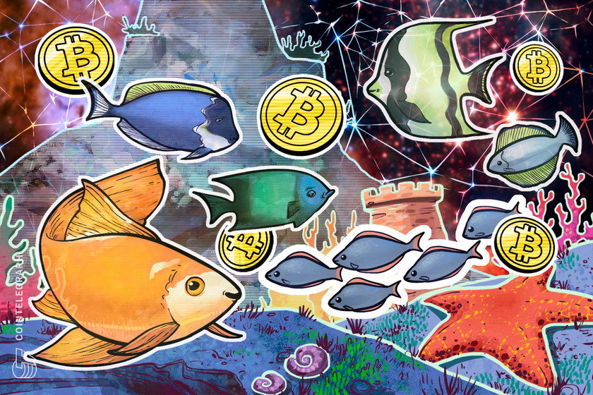 Bitcoin shortage as Wall Street FOMO turns BTC whales into 'plankton'