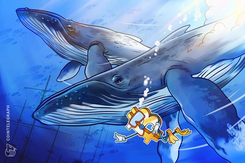 仮想通貨相場急落の裏で、謎のクジラがビットコインを3500BTC購入